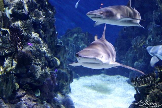 Barcelona Bus Turistic Tour Aquarium Sharks