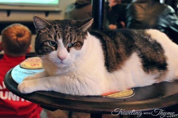 Spitalfields Pub Lenny The Cat
