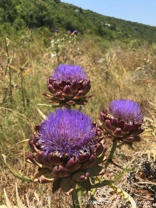 Lebanon Nature Flowers Lebanese Flora
