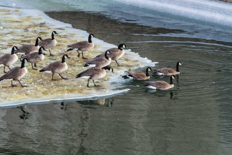 north-dakota-winter-2017-1082