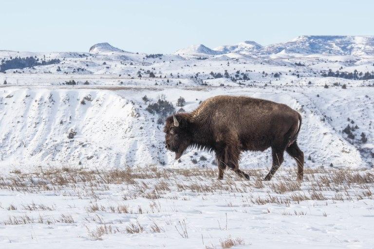 north-dakota-winter-2017-1243