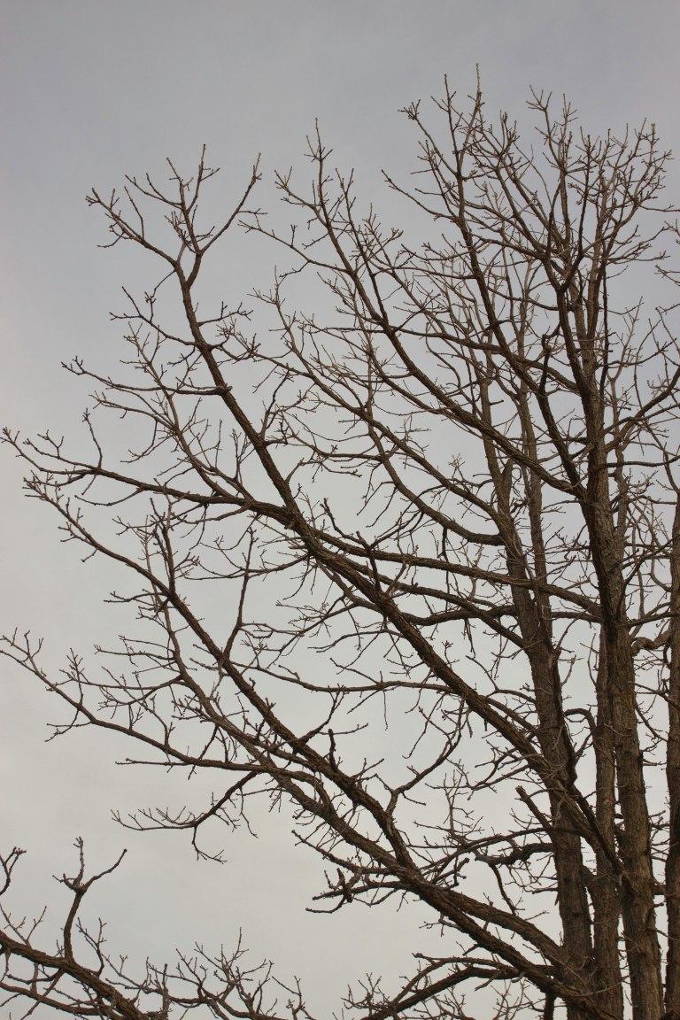 UW Arboretum-4807