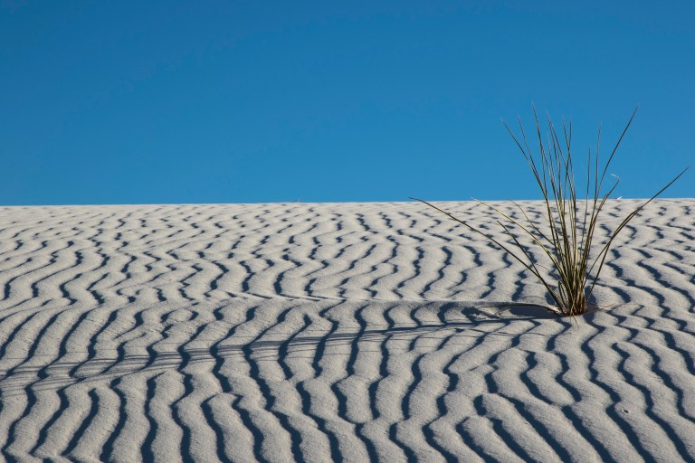 White Sands NM-5994