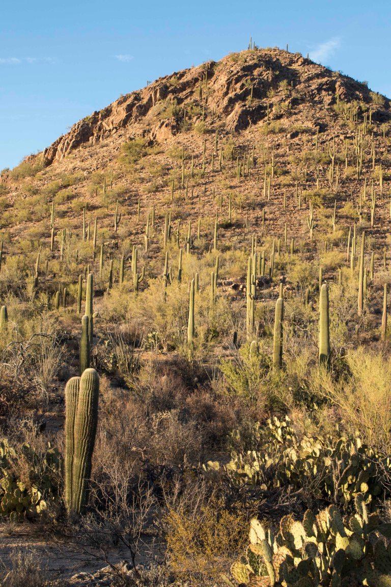Saguaro NP-6318