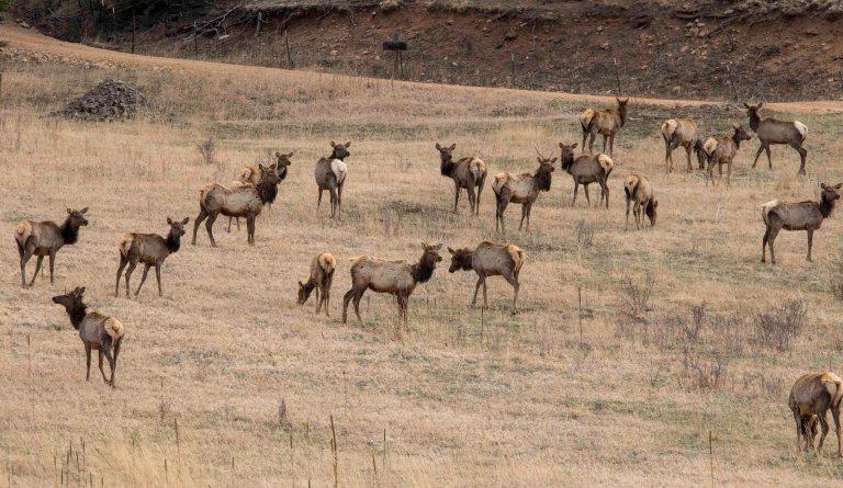Around Taos Part 2-3581