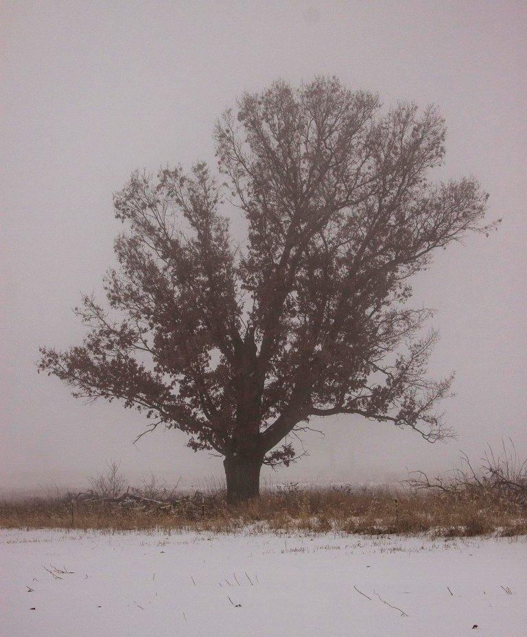 trees-3137