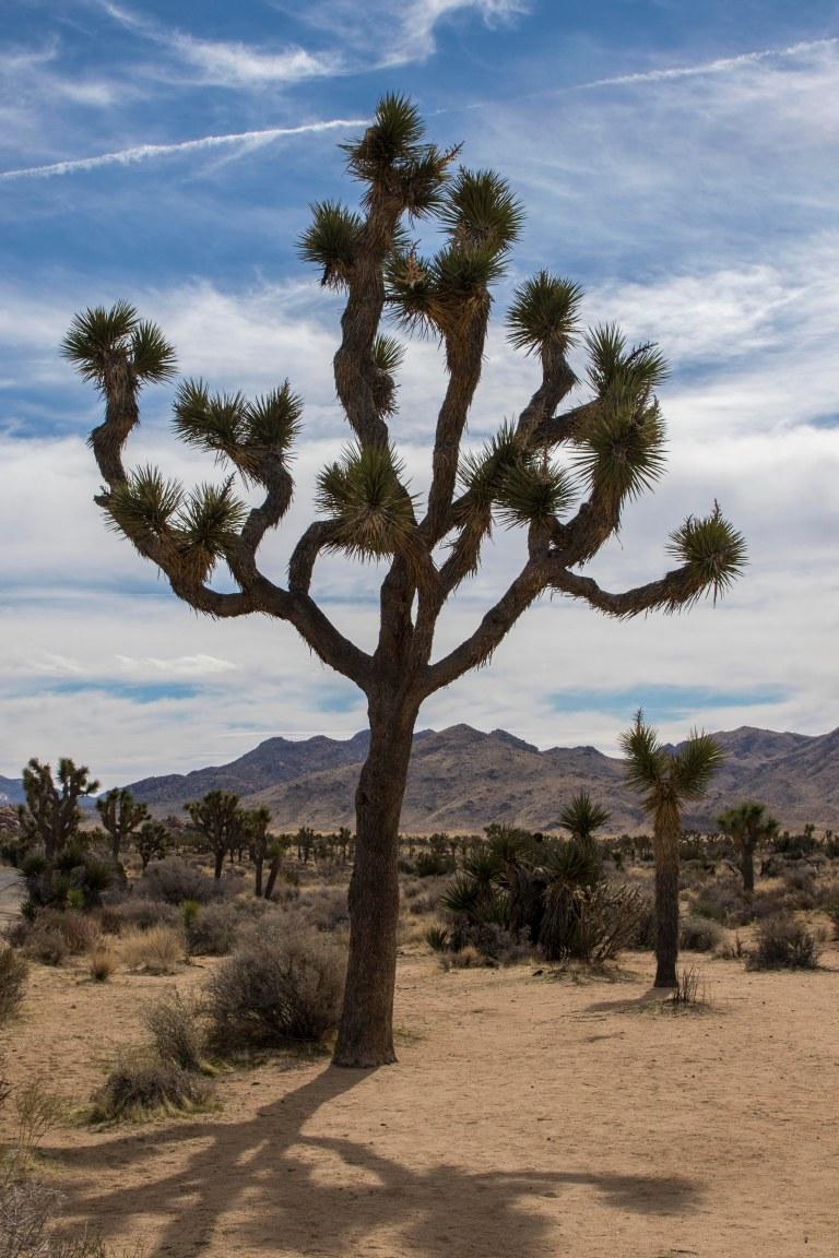 trees-6503