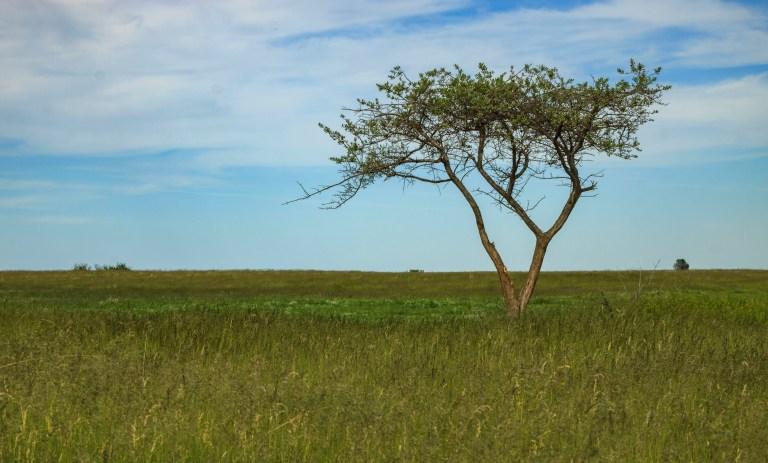 trees-7519