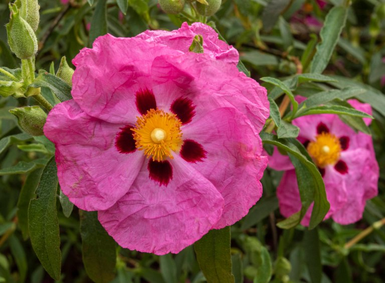 Kew Gardens-9659
