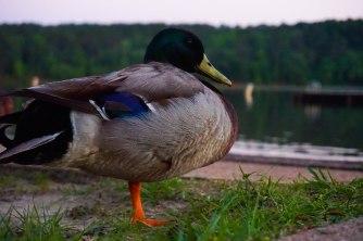 Mallard Tyler State Park