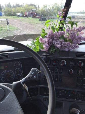 lilacs for the journey