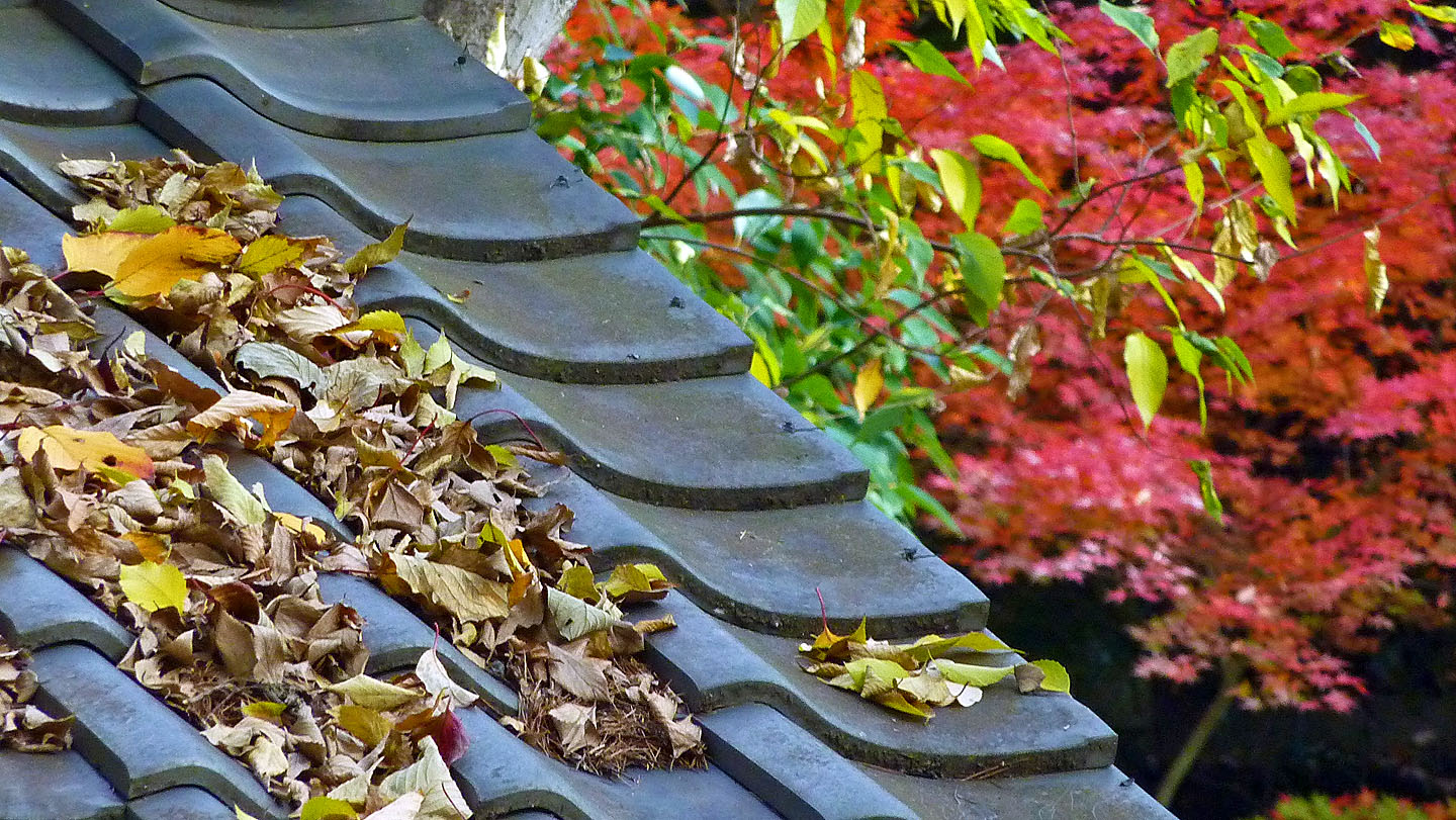 Image result for leaves on a roof