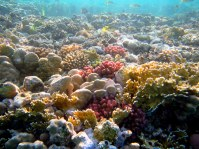 Colourful reef