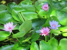 La Flora pond