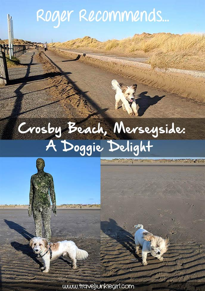 Its a Doggie Delight at Crosby Beach on Merseyside - perfect for walking your dog as they can be off lead the whole time, and all year round on the beach; from a travel blog by www.traveljunkiegirl.com