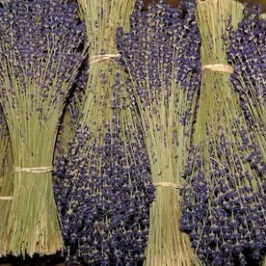 Lavender has been used for centuries to soothe frazzled nerves.