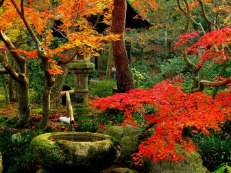 Photo: Saiho-ji Temple Garden