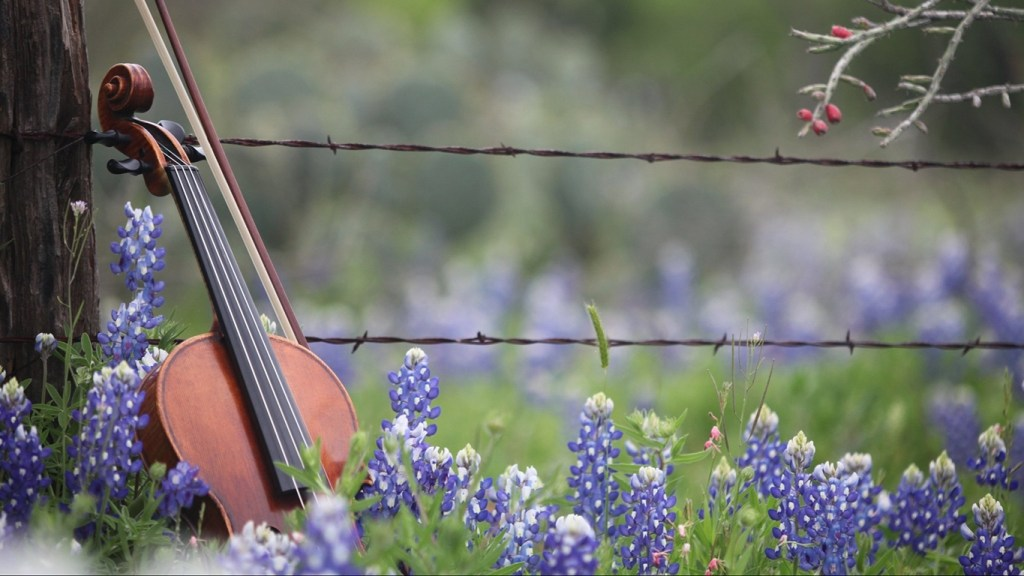 Spring Festivals in Texas - A Fiddle in Bluebonnets for the Llano Fiddle Festival