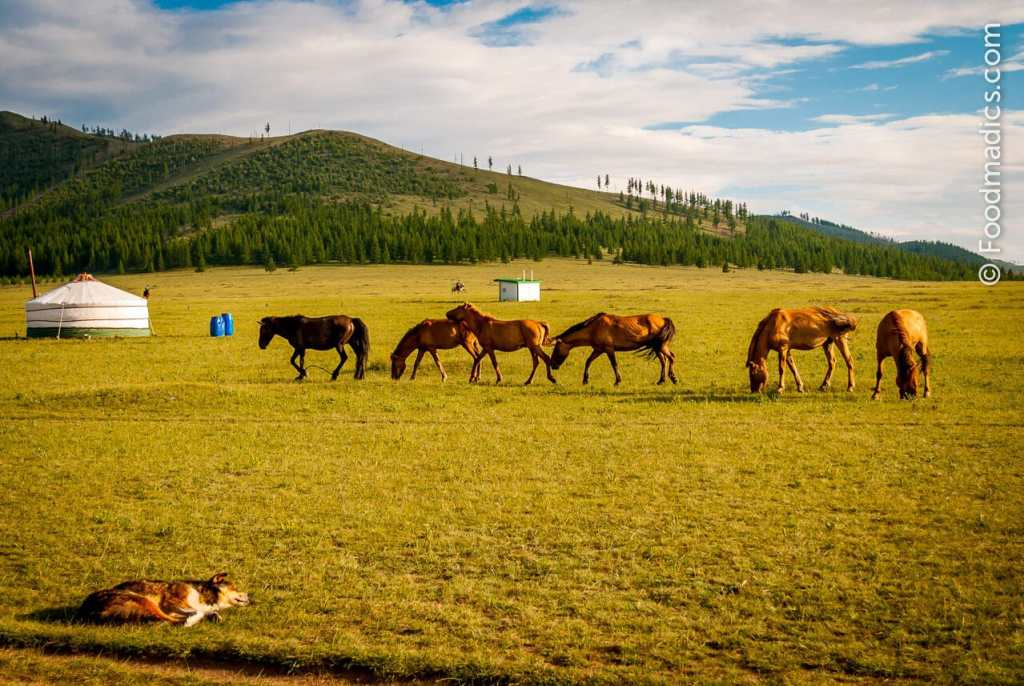 top places to visit in asia Mongolia