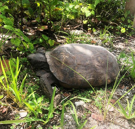 View of a turtle in a grassland
