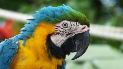 Guadeloupe - Kite (11)