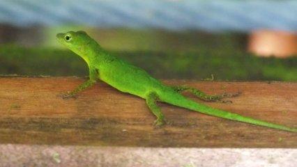 Guadeloupe - Kite (16)