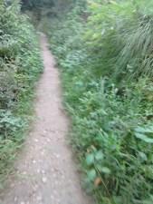 Jansooh -Village Travel Pathway Pics6