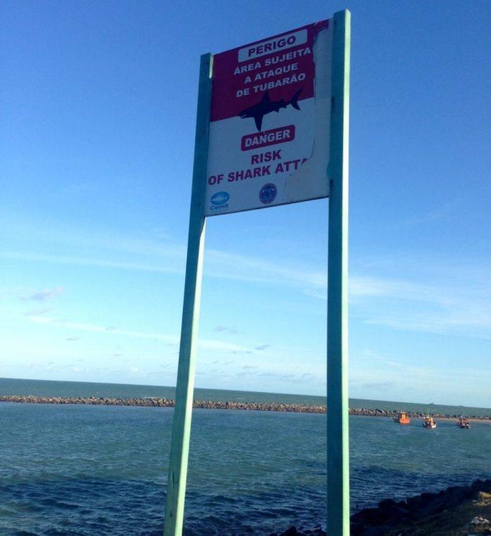 Shark attack warning signs