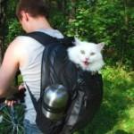 Коты – путешественники