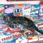 Крымский кот (история из жизни)
