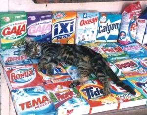 севастопольский кот