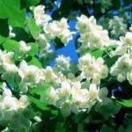 Туры по Украине на майские праздники – куда поехать на выходные в начале мая?