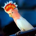 потешные попугаи