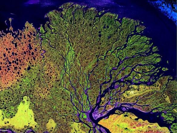 река Лена с космоса