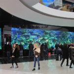 Слухи о смерти акулы в киевском ТРЦ Океан Плаза преувеличены