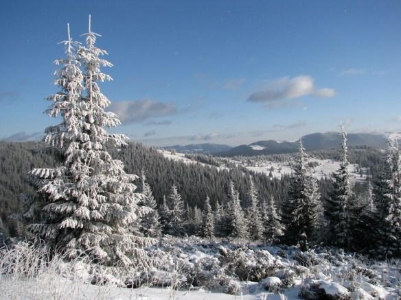 виды Карпат зимой