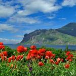 Каким обещает быть отдых в Крыму-2014