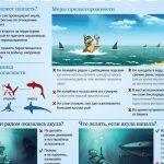 Египет. Акула напала на украинских туристов в Шарм-эль-Шейхе. Новости 2020 и комментарии