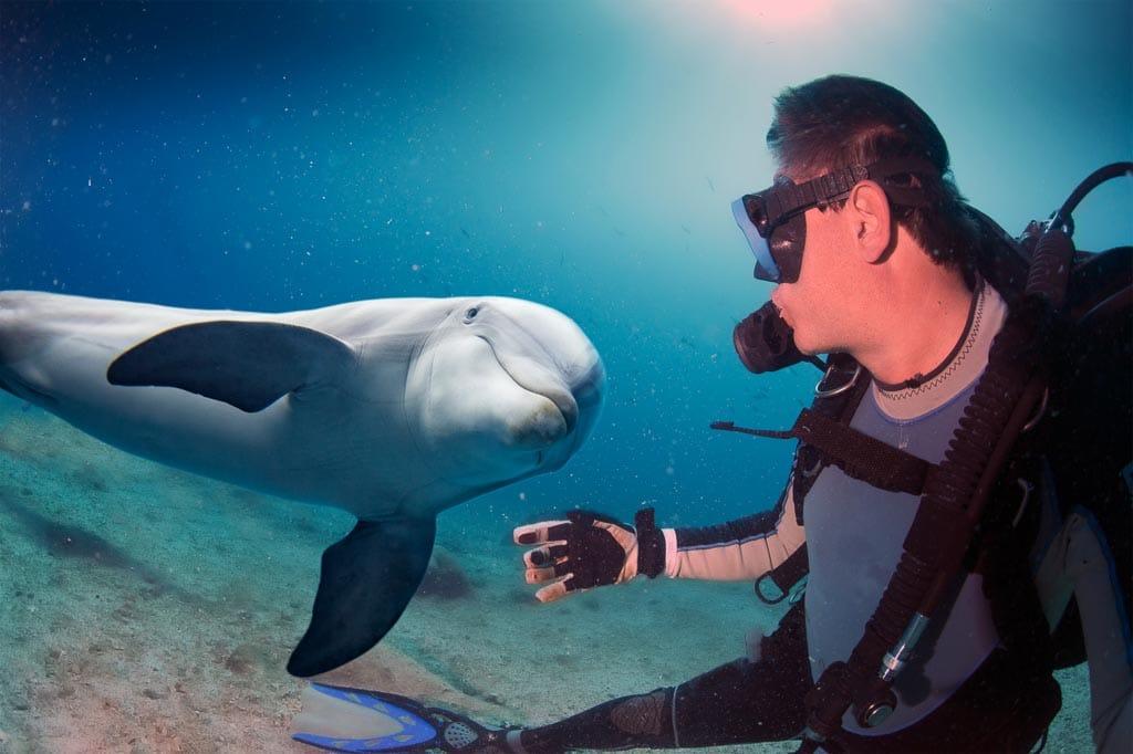 Wo kann man mit Delfinen schwimmen ?