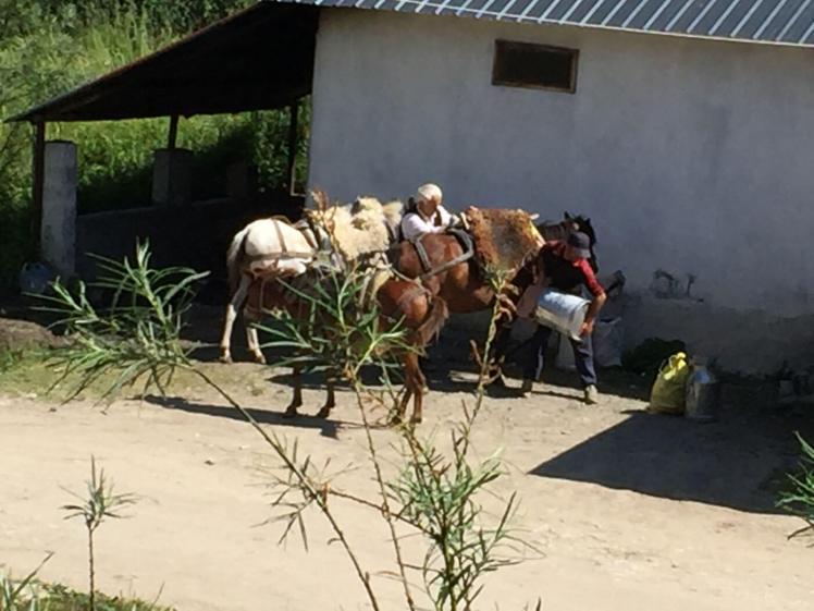 Radomire-mannen-met-paarden-en-melkbussen