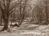 A rest inside the woods