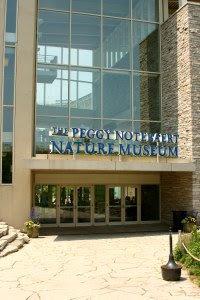 Peggy Notebaert Nature Museum