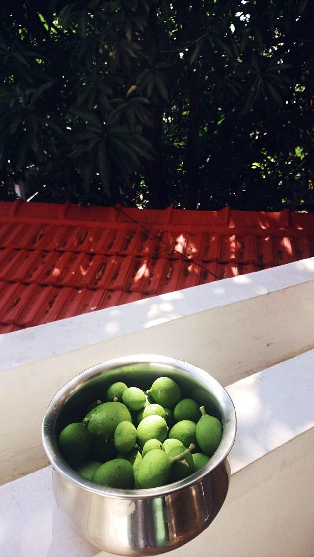 Day 14: Mango Season