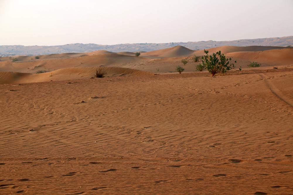 A Desert Safari in Schardscha - Dune Bashing