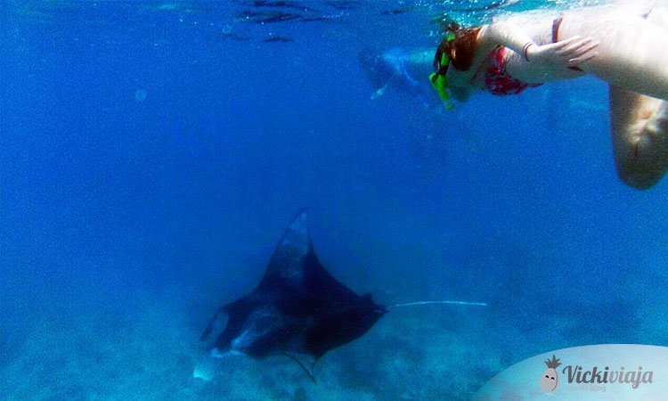 Snorkeling Manta Rays Maldives South Asia ASIA