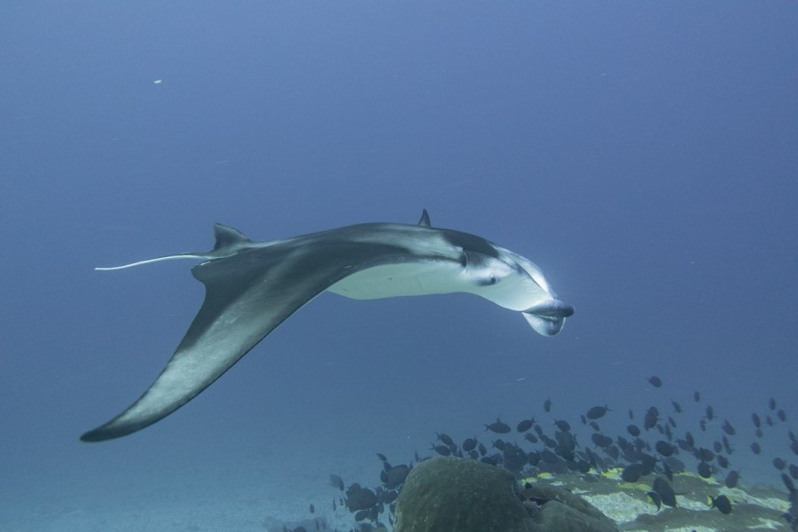 Diving Maldives South Asia ASIA