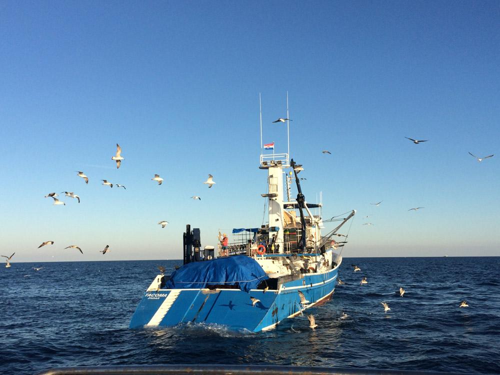 Fishing trawler while deep-sea fishing in Pula