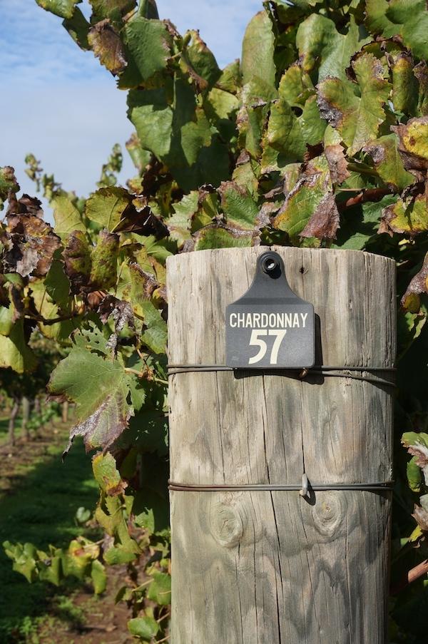 Upper Reach Swan Valley Wineries Chardonnay