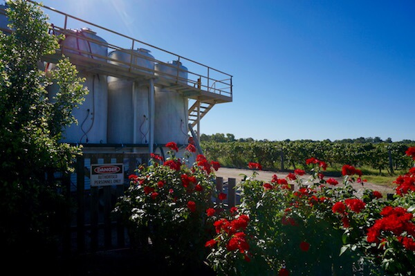 Windy Creek Winery & Vineyard - Swan Valley