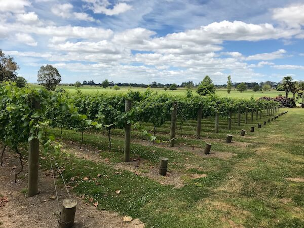 Vilagrad Wines - The Vines - Hamilton, Waikato